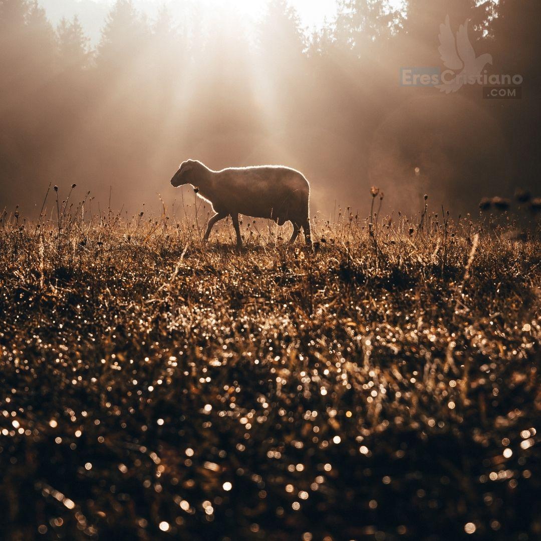 imagen de oveja perdida