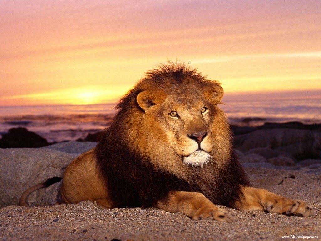 leon posando