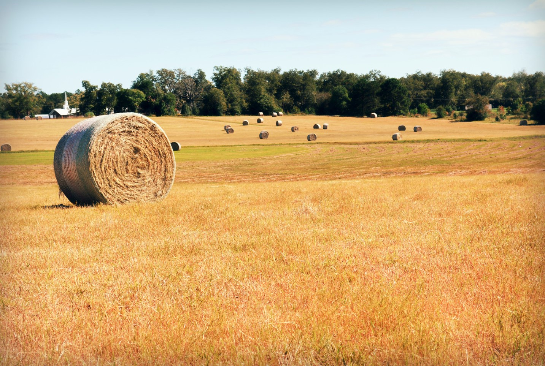 fotos de ranchos