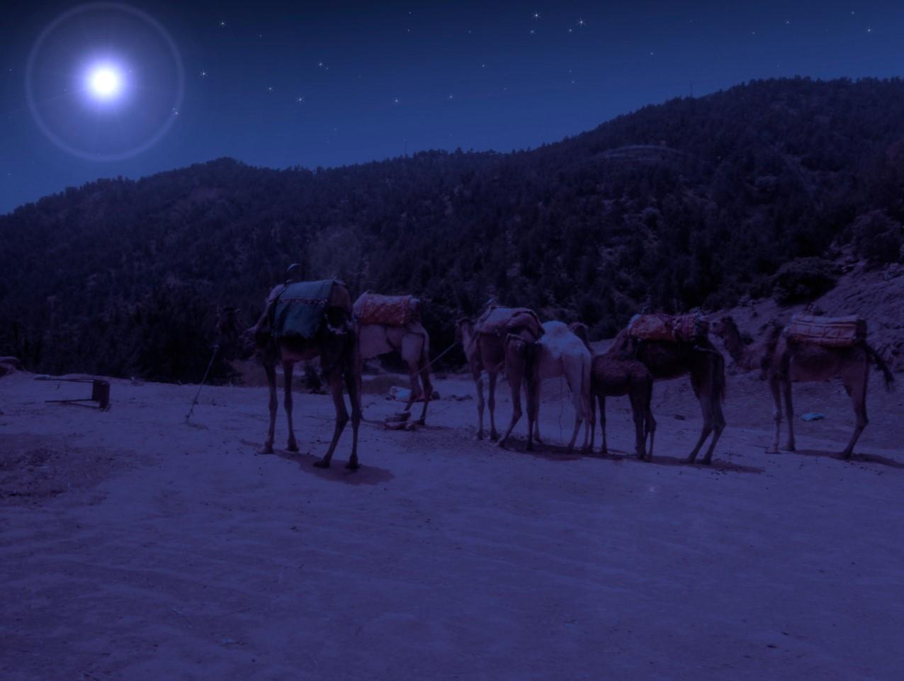 camellos y desierto
