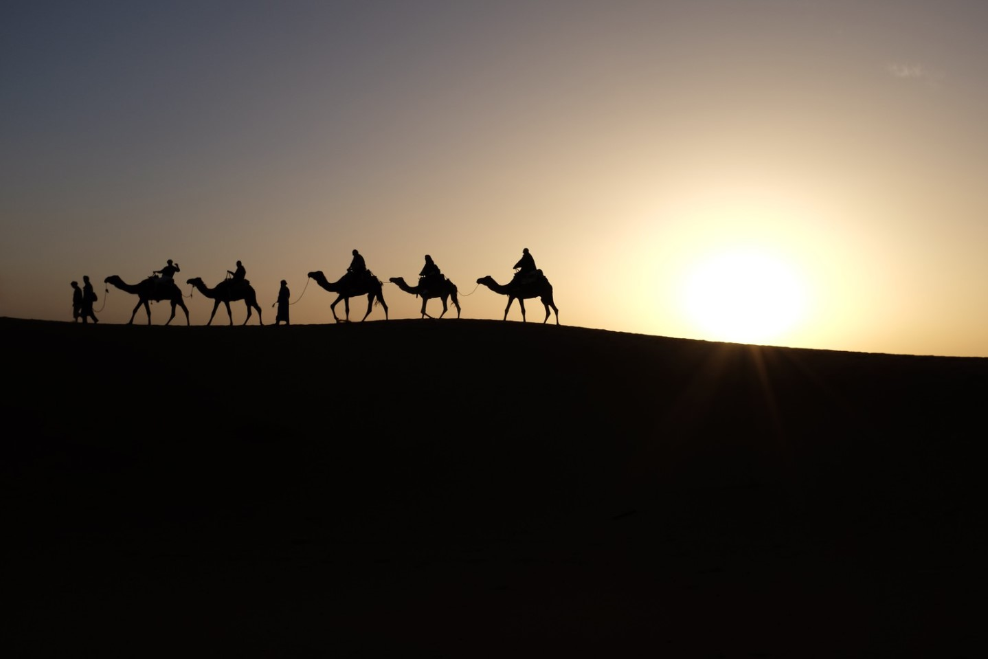 fotos de camellos