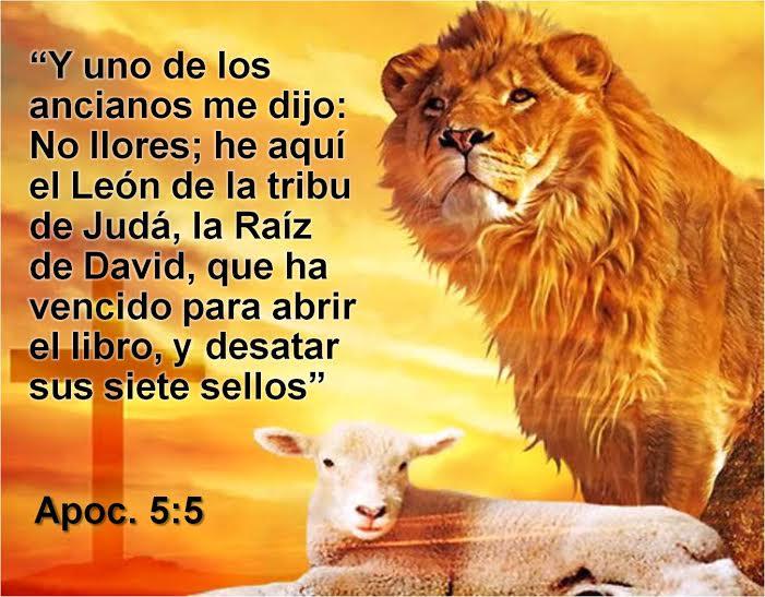 León y oveja